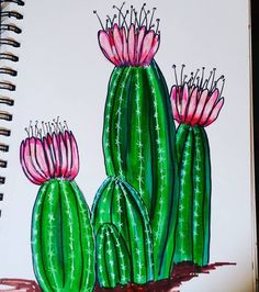 a cactus in bloom!  -  I love to draw cactus...Mik Lear, artist    #Regram via @miklear