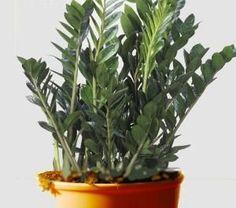 10 plantes d int rieur faciles d 39 entretien et quasi intuables plants rooftop gardens and - Plantes d int u00e9rieur faciles d entretien ...