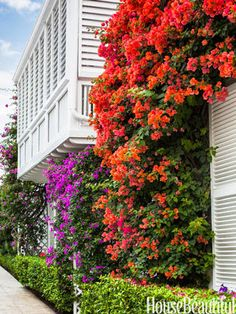 The Glam Pad: Mimi McMakin Decorates a Palm Beach Maisonette Bougainvillea surrounds the balcony of the Bermuda-style house. The homes of Major Alley are nestled together along a walkway that is no more than five feet wide. They are painted white and laden with bougainvillea.