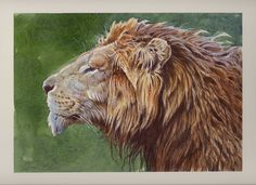 Animal Art Gallery - Aaron Blaise Art For Sale