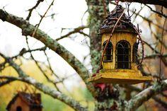 My type of bird house