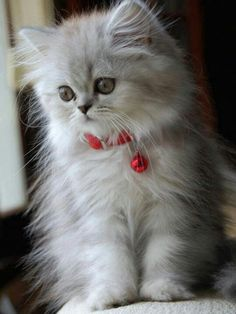 . So cute! #NationalCatDay