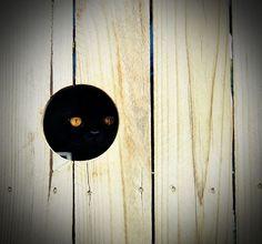 Black cat through the fence