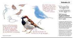 Siegfried Woldhek - Tekenen op vakantie les 5 Pastel Drawing, Bird Drawings, Portrait, Sparrows, Painting, Animals, Drawing Tutorials, Journal, Create