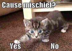 Funny Cat Memes of Cute Kittens Cute Kittens, Cats And Kittens, Funny Animal Pictures, Funny Animals, Cute Animals, Funniest Animals, Puppy Pictures, Baby Animals, Cute Cat Memes