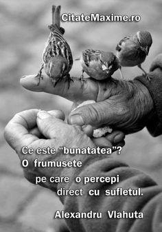 """""""Ce este """"bunatatea""""? O frumusete pe care o percepi direct cu sufletul."""" #CitatImagine de Alexandru Vlahuta Iti place acest #citat? ♥Distrib..."""