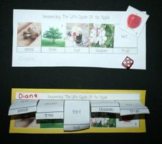 These activities can be used several different ways: as a worksheet for table top sequencing, as a flip book, or for a game. Includes 6 life cycle of an apple teacher cards, suitable for your word wall, pocket chart or mini booklet.