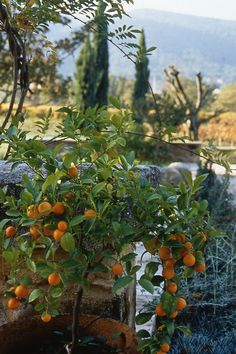 La Bastide de Marie | Luxury Accommodation Provence | Exteriors - Bastide de Marie : luxury property with hotel services in Provence (France)