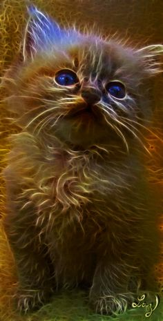 Scruffy by Lashington