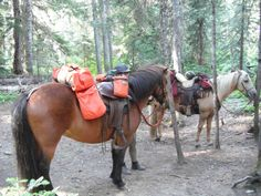Horse Camping Without Pack Stock