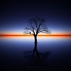 The Bird & The Tree by Kristof VT