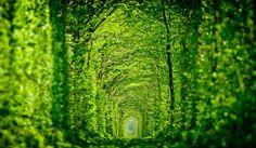 LE TUNNEL DE L'AMOUR, KLEVAN, UKRAINE  Ce tunnel romantique suit une ancienne ligne de chemin de fer, depuis son abandon les arbres s'y entr...
