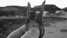 I Love Turtles