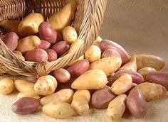 http://www.rustica.fr - Menusà base de pommes de terre d'hiver
