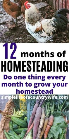 When you start your homesteading journey it can be overwhelming and confusing. Check out this 12 month plan to grow your homestead with practical, easy homesteading tips! Homestead Farm, Homestead Gardens, Homestead Living, Farms Living, Homestead Survival, Farm Gardens, Outdoor Gardens, Survival Prepping, Survival Skills