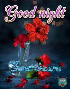 Good Night Greetings, Good Night Gif, Holiday Day, Night Quotes, Sweet Dreams, Sd, Birthdays, Gifs, Holidays