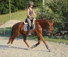 #eden#ehrenstolz #rohdiamant #rheinländer #wallach #youngster #younghorse #3yo #fuchs #trab#horse#paard #cheval #hest#horses #horseriding #equestrian #equestrianearth123 #pferdeschoenheiten #pferd #reiten#eskadron #hvpolo #hg_picture #dressurpferd #dressage#dressagehorse