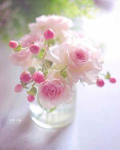 Beautiful Flowers Wallpapers, Beautiful Rose Flowers, Beautiful Flower Arrangements, All Flowers, Flowers Nature, My Flower, Fresh Flowers, Floral Arrangements, Morning Flowers