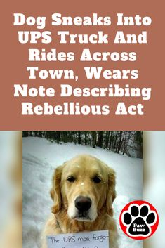 Hides In UPS Truck And Rides All Over Town, Wears Note With Important Message For All The Golden Retriever did what he had to do!The Golden Retriever did what he had to do! Loyal Dog Breeds, Loyal Dogs, Build A Dog House, Skye Terrier, Dog Shaming, Working Dogs, Rescue Dogs, Puppy Love, Dog Training