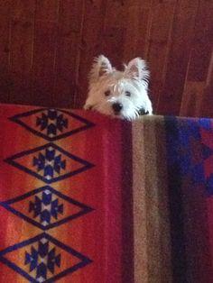 Rukus in the log cabin loft