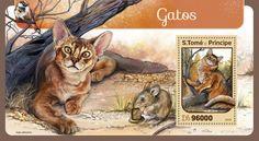 ST16407b Cats (Somali cat)
