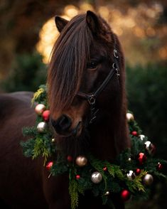You searched for Pony - LastStepPin Baby Horses, Cute Horses, Pretty Horses, Horse Love, Christmas Horses, Christmas Animals, Horse Photos, Horse Pictures, Most Beautiful Horses