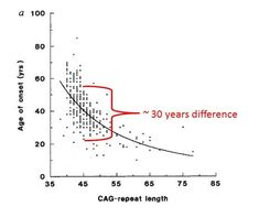 The determinants of age at onset for Huntington's disease are complex. In general, the higher the number of CAG repeats, the earlier the onset of symptoms. However, for any given CAG repeat number, the variability in age at onset may be up to 30 years. This is probably due to the effects of genes other than HTT (so-called genetic modifiers), and to environmental factors such as lifestyle and diet. Taking this altogether, it's very difficult to accurately predict ….