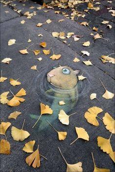 Straßenmalerei, Fisch, Hamster, Boden, Gehweg in Bildkategorie STRASSENMALEREI