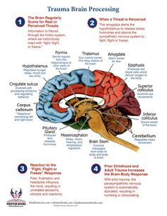 Brain Facts, Facts About The Brain, Trauma Therapy, Brain Science, Life Science, Mental And Emotional Health, Stress Disorders, Anatomy And Physiology, Educational Psychology