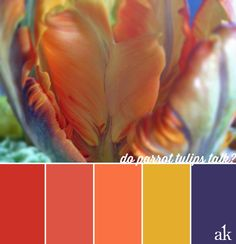 R: Parrot tulips have perfect colors (with orange/purple/green). Would be beautiful for bouquet, and accent decor