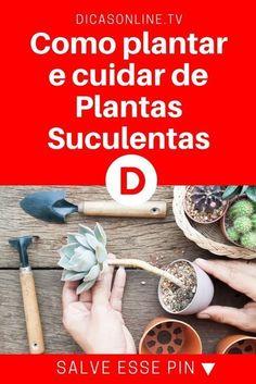 Suculentas dicas, cultivar suculentas | Como plantar e cuidar de Plantas Suculentas | Veja quais são os cuidados necessários para manter essa planta em casa: | É uma planta fácil de cuidar e que deixa a casa linda: