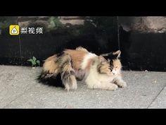 This cat has three TAILS.. ... по саду в Пекине, Китай..)))..Две молодые женщины были шокированы, увидев необыкновенную кошку 24 мая..  с тремя хвостами была снята на видео Её три хвоста, отчетливо видно в клипе, имеют схожую длину и цвет Read more: http://www.dailymail.co.uk/news/article-4541918/Bizarre-video-footage-shows-cat-three-tails.html#ixzz4iAxHAKTF