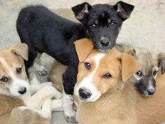 19 mitos que afectan terriblemente la vida de tu perro - Taringa!