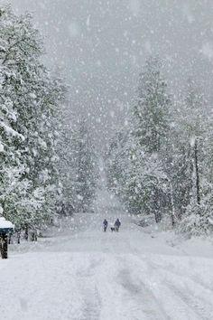 Snow Day / Bill Stormont