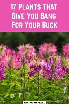 17 plants that give you bang for your bucks. We call them bargain plants- those who need minimal input and give us the maximum output. These are cheap plants for beginner gardeners that give maximum output for the input. #bargainplants #cheapplants