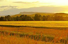 Golden evening twilight across the plains of eastern Montana #PlainsRegion #DiscoverNativeAmerica #AIANTA