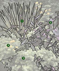 1. Adam's needle (Yucca filamentosa 'Bright Edge'), Zones 5–10 2. Tradescantia (Tradescantia pallida 'Purple Heart'), Zones 10–11 3. Licoric...
