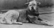 Hachiko, the Dog Who Made Richard Gere Cry