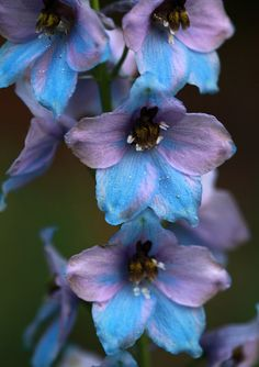 larkspur flower tattoo birth flower for july...possibly this instead of water lily?