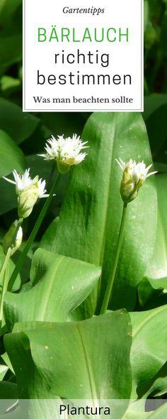 Hortensiensorten Die 6 schönsten Hortensien-Arten