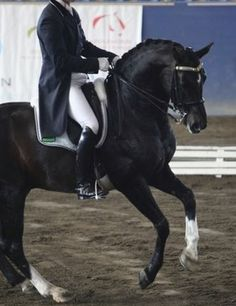 Fluency in motion is the key to pirouettes and, in this third article in a series on training for an eight, it's a case of thinking big with large pirouettes and refining them down to small as you establish control, read more: http://www.equestrianlife.com.au/articles/Think-big-to-perfect-the-pirouette
