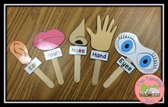Senses - Sense Sticks from The Teaching Zoo! - Five Senses – Sense Sticks from The Teaching Zoo! -Five Senses - Sense Sticks from The Teaching Zoo! - Five Senses – Sense Sticks from The Teaching Zoo! - Five Senses Activity for Preschool Students Five Senses Preschool, My Five Senses, Senses Activities, Kindergarten Science, Preschool Classroom, Classroom Activities, Learning Activities, Preschool Activities, Kids Learning