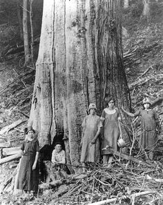 The Lord of the Forest: the American Chestnut