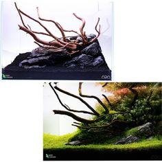 Nano Tank, Aquascaping, Planted Aquarium, Italy, Plants, Instagram, Italia, Plant, Planets