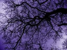 Tree and purple sky