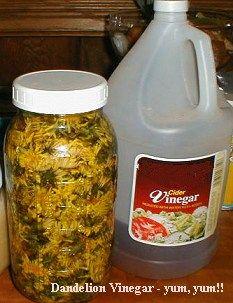 Herbal Medicine Chest... IN YOUR BACK YARD by Susun Weed - Weed Wanderings Herbal eZine