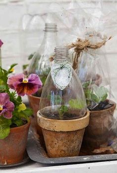Récup bouteille de soda pour cloche à fleurs Pinterest via Nat et nature