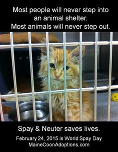 Most people will never step into an animal shelter. Most animals will never step out. Spay & Neuter saves lives! #WorldSpayDay 2/24/15. MaineCoonAdoptions.com Oakland, CA
