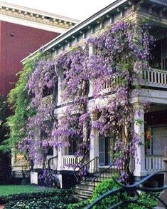 Wisteria Covered Shared by www.nwquiltingexpo.com @NWQuilting Expo #nwqe #gardening