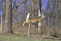 For My Hubby: Deer Hunting 101: Scent Control in 10 Steps